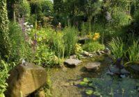 Quelles plantes aquatiques choisir pour votre jardin